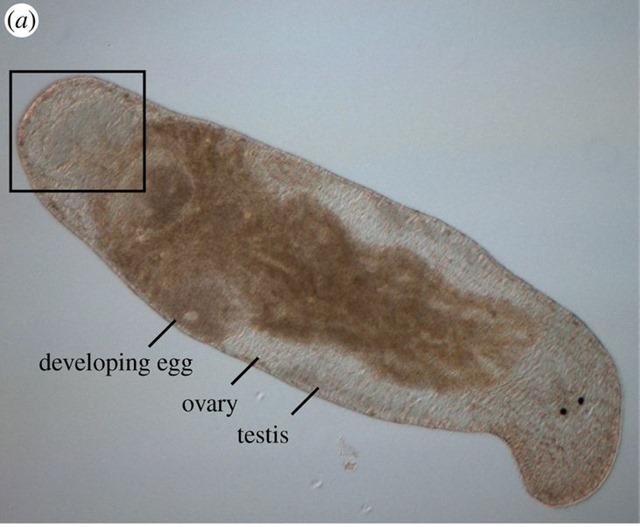 Superbe Latina Shemale Dgustation de son propre sperme