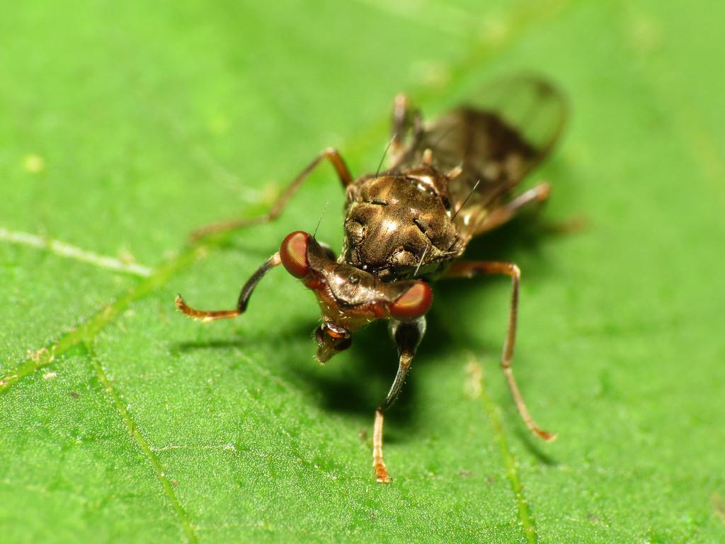 Mais pourquoi diable cette mouche a les yeux si cart s - Pourquoi les mouches piquent ...