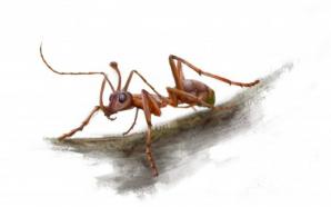 Découverte d'une fourmi-licorne vieille de 99 millions d'années