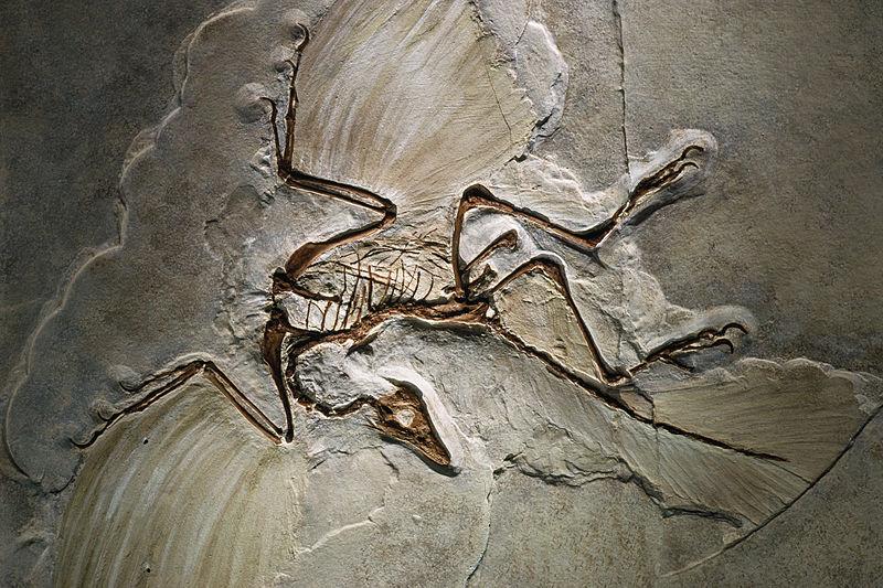 Le dinosaure à plumes le plus connu de l'Histoire était-il…