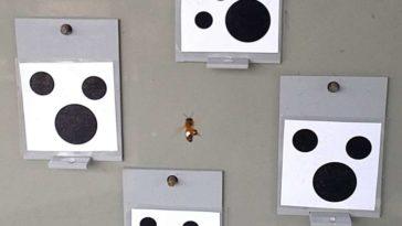 abeille zéro