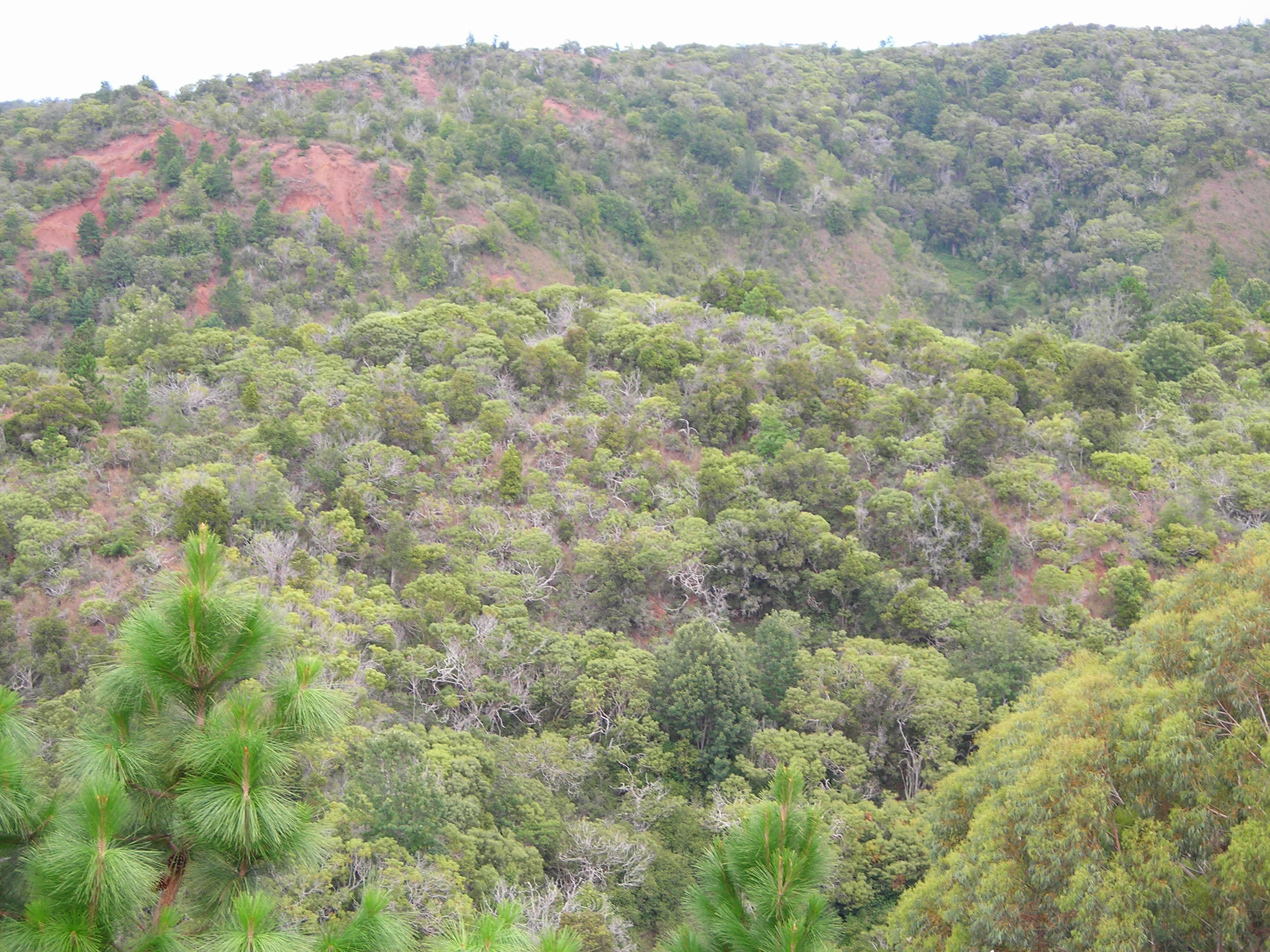 Sub Tropical Dry Ever green Forest