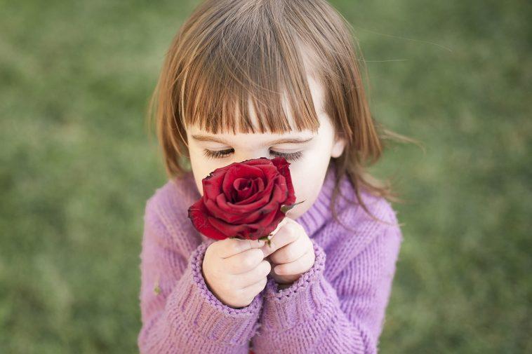 sentir rose