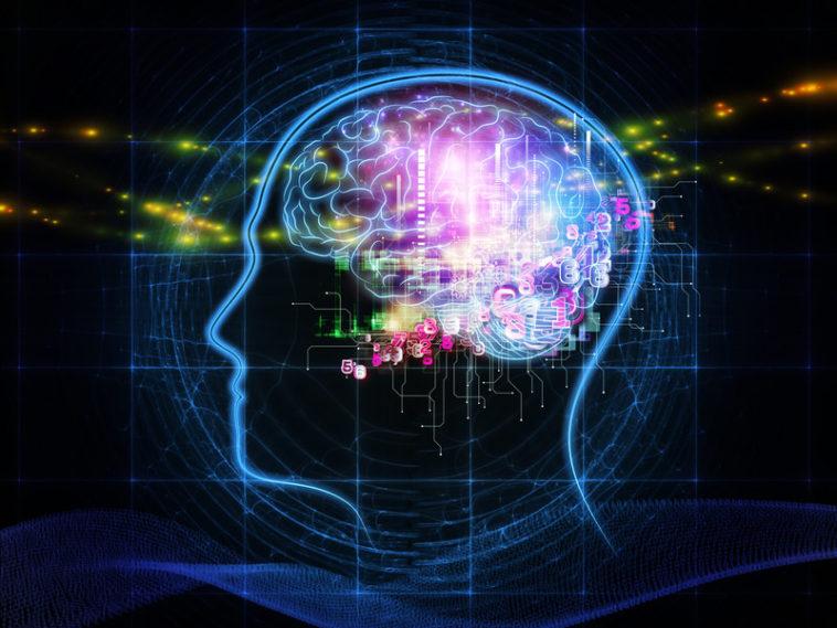 cerveau intelligence