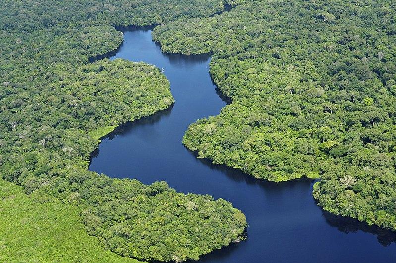 L'Amazonie, important vivier de médicaments actuels et à venir
