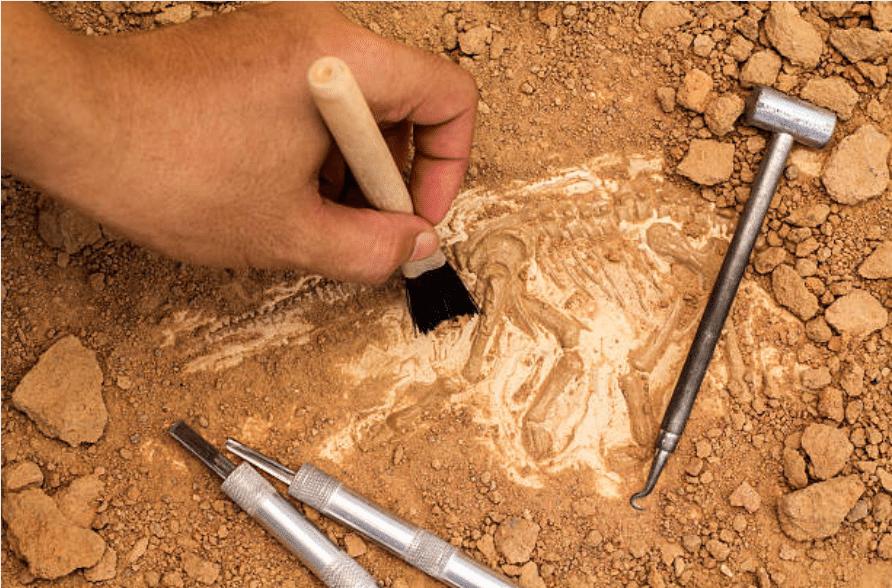 fouilles archéologique paléontologique fossiles