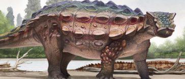 dinosaure blindé Akainacephalus johnsoni