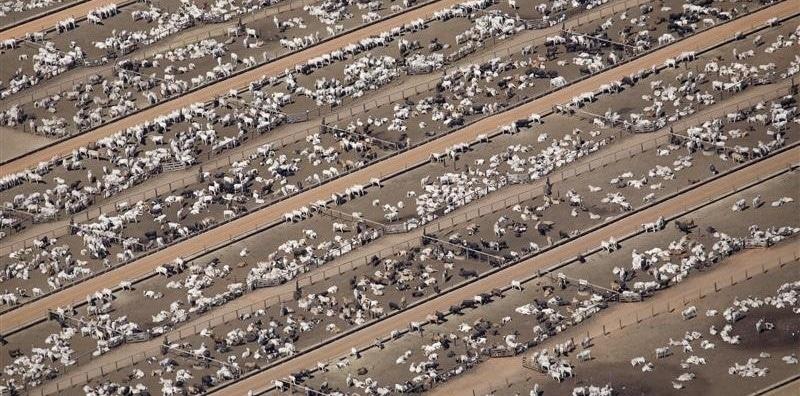 viande laboratoire élevage intensif