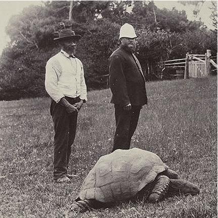 Jonathan tortue geante seychelles 1886
