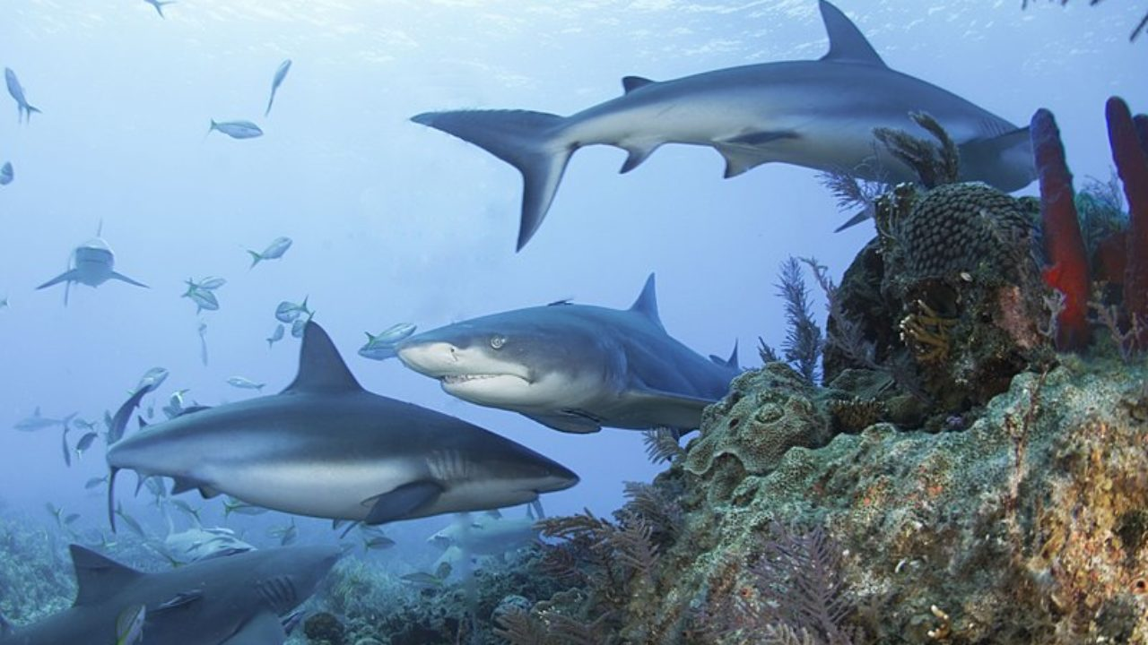 Beaucoup de poissons dans la mer datant du Canada