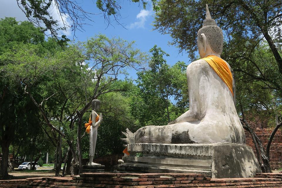 thailande arbres