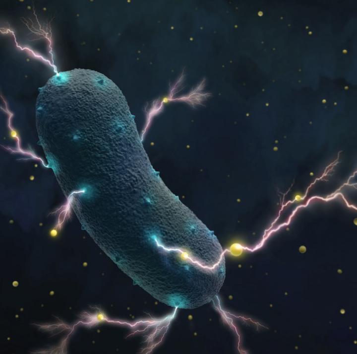 bactérie électrogène