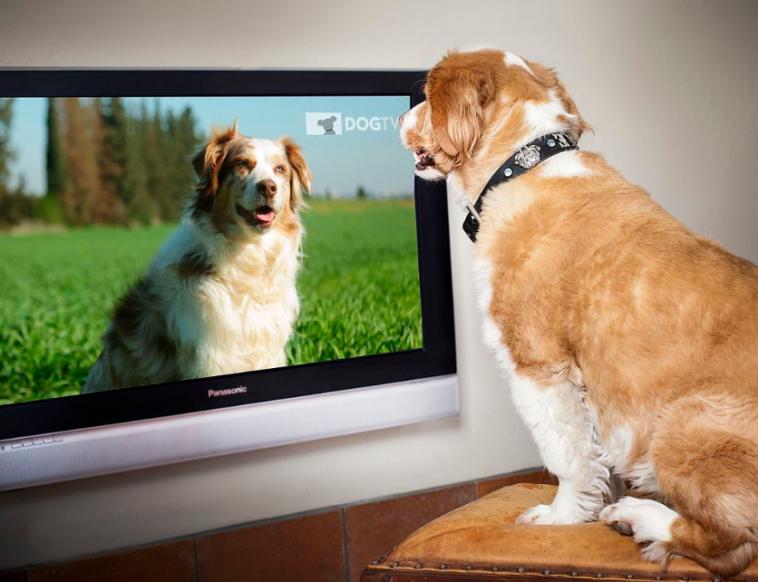 dog tv chaîne télévision chiens