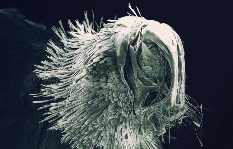 papillon microscope