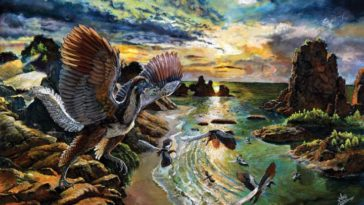 Archaeopteryx lithographica oiseau reptile dinosaures