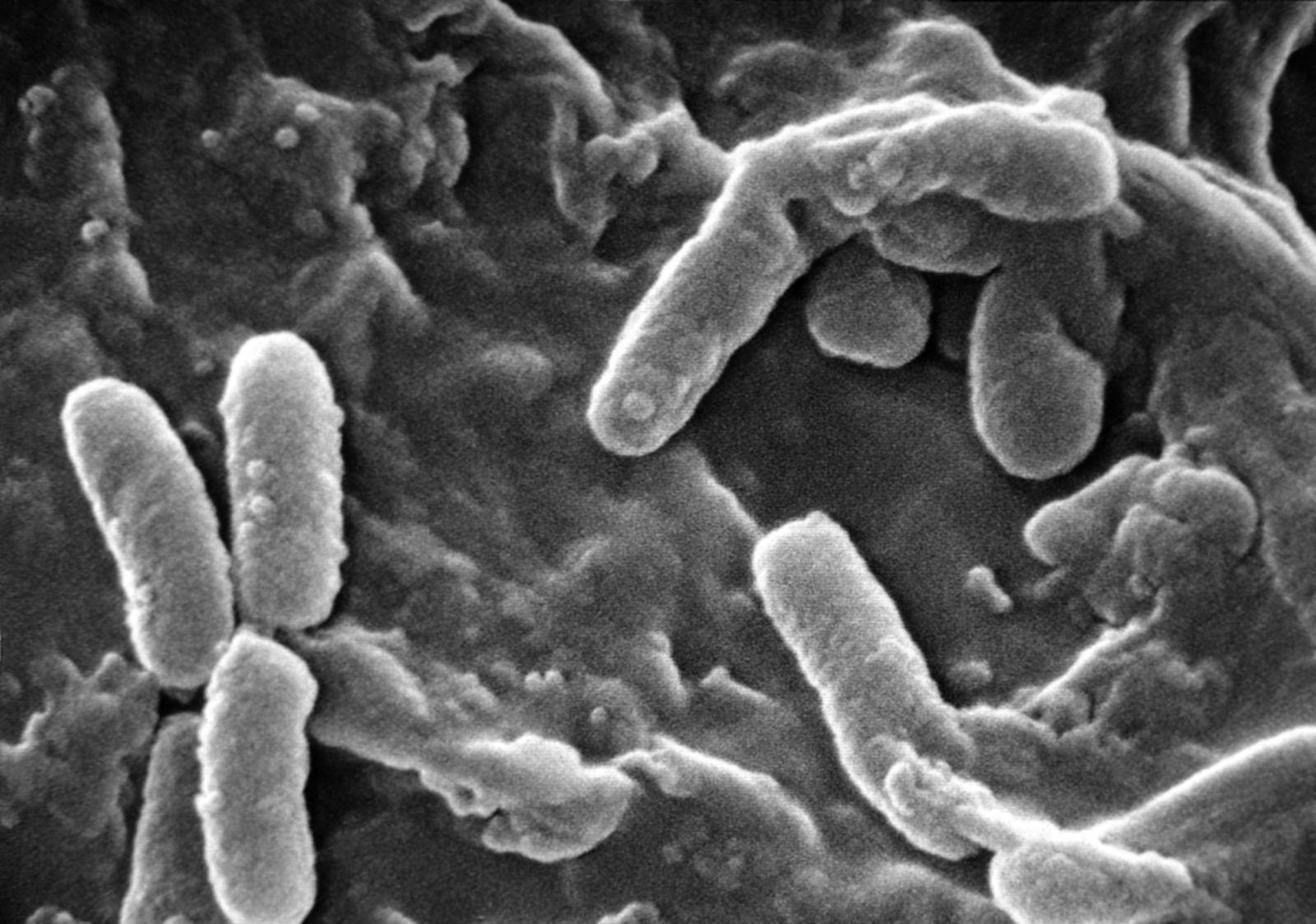 résistance antibiotiques
