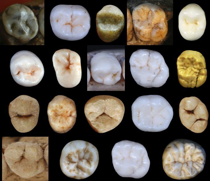 néandertaliens dents