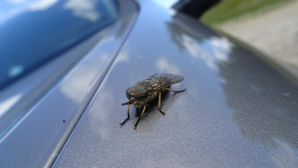 Pourquoi n'y a-t-il pas d'insectes géants aujourd'hui sur Terre ? - SciencePost
