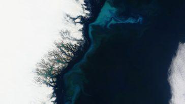 icebergs changement climatique