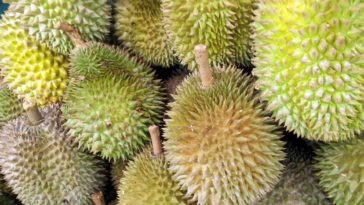 fruit durian 2