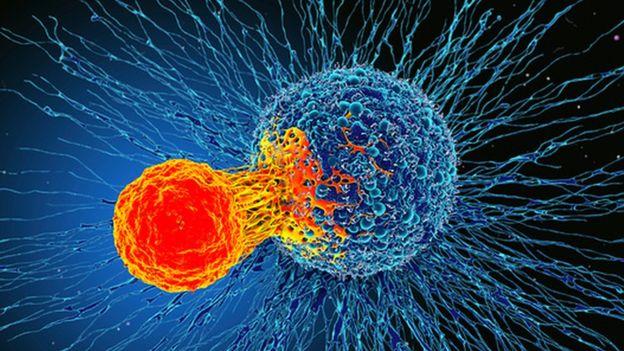 cancer cellules