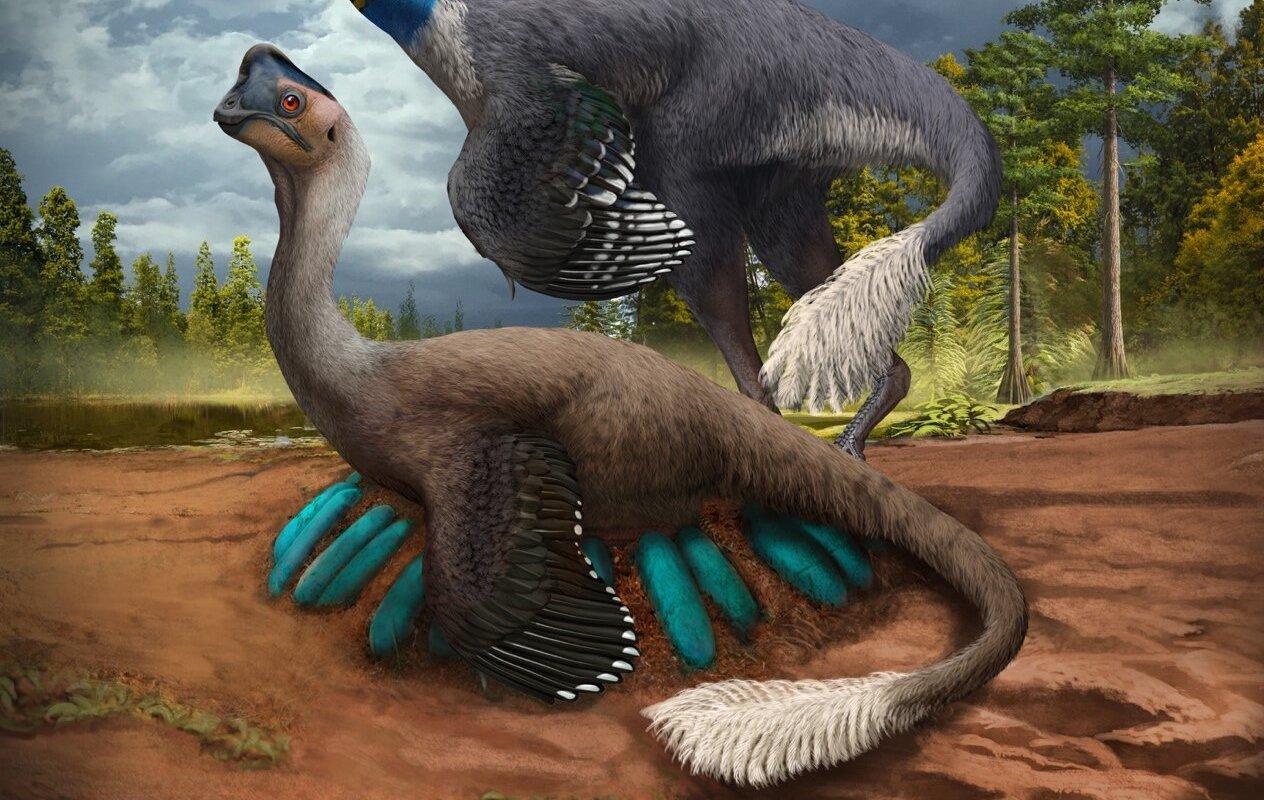 Découverte exceptionnelle : un dinosaure retrouvé assis sur un nid d'œufs - SciencePost