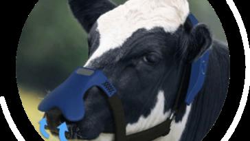 masque vache rots méthane