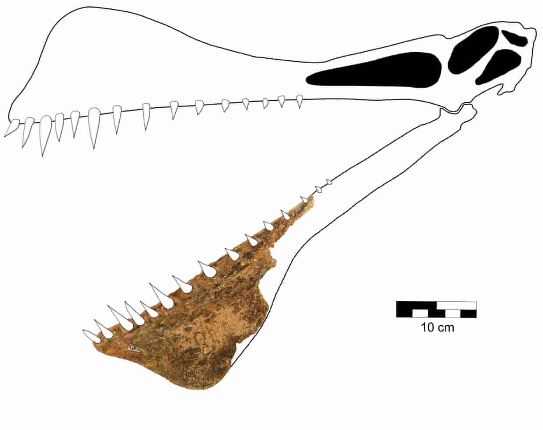 reptile ptérosaure australie