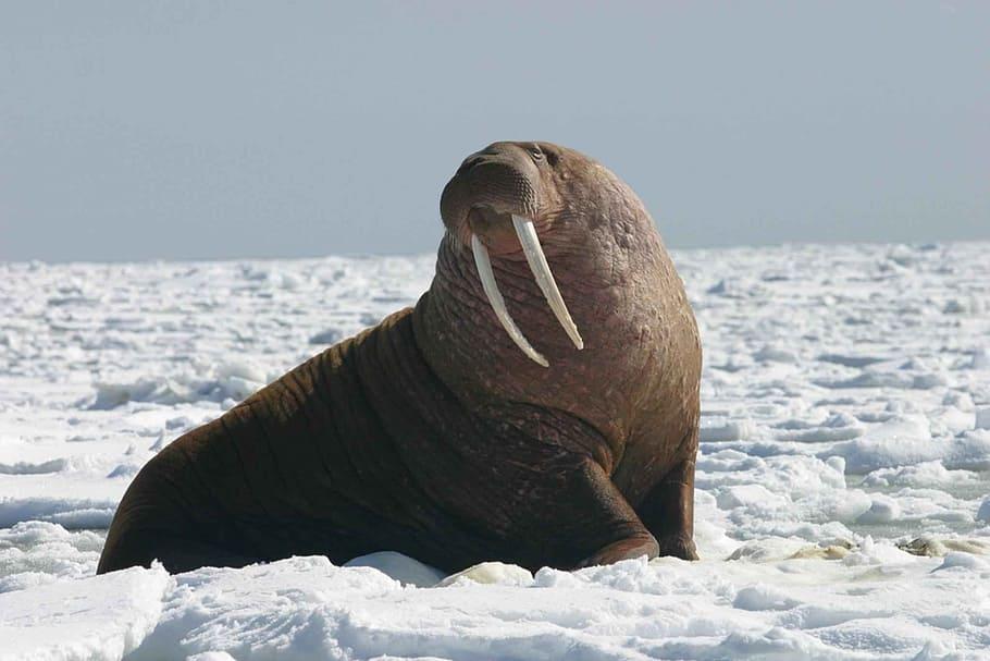 morse arctique